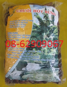 Bán Chuối Hột Rừng Tây Nguyên-Chữa nhức mỏi, tán sỏi, lợi tiểu, chữa tê thấp